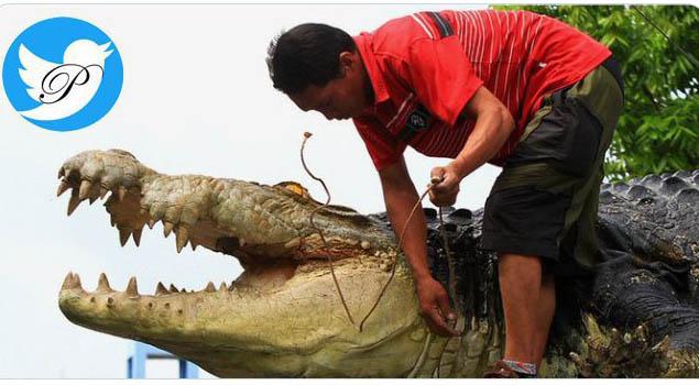 کروکودیل ۵ متری، صاحب خود را زنده زنده خورد! + عکس