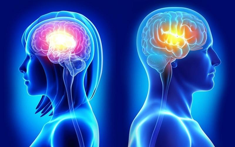 كدام گروه مغز جوان تري دارند، زنان يا مردان؟