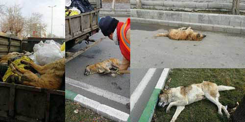 سگکشی اینبار در خوی + عکس