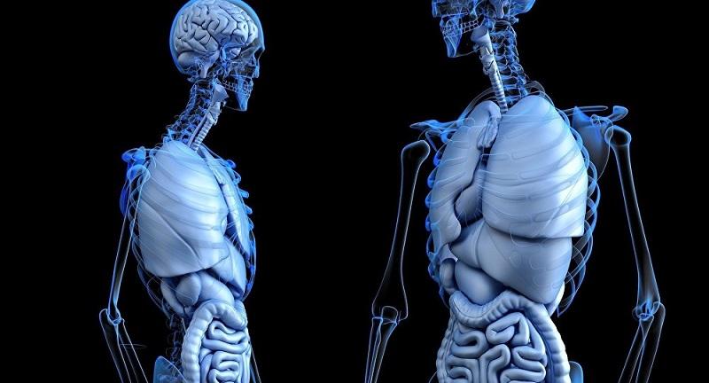 ۱۲ واقعيت عجيب و جالب در مورد بدن انسان كه احتمالا نميدانيد