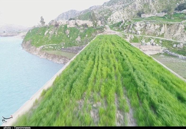 کشت گندم روی پل تخریب شده در ایران! + تصاویر