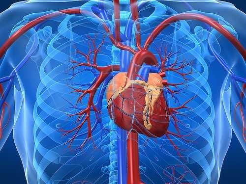 کدهایی برای نگرانی در علائم تپش قلب