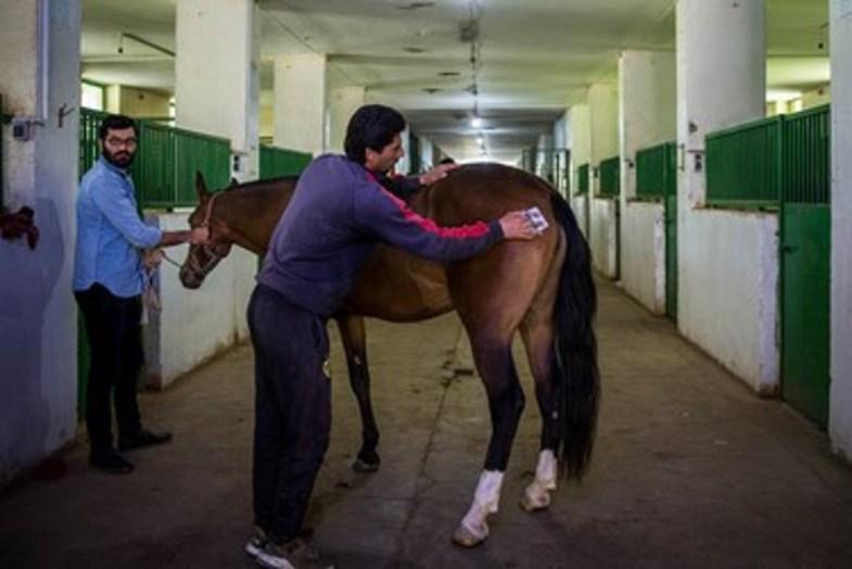 حراج اسب به نفع سیل زدگان + عکس