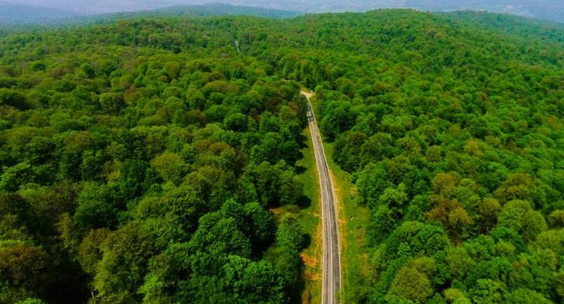 کاهش ۱۳۰ درصدی آتشسوزی در جنگلهای کشور