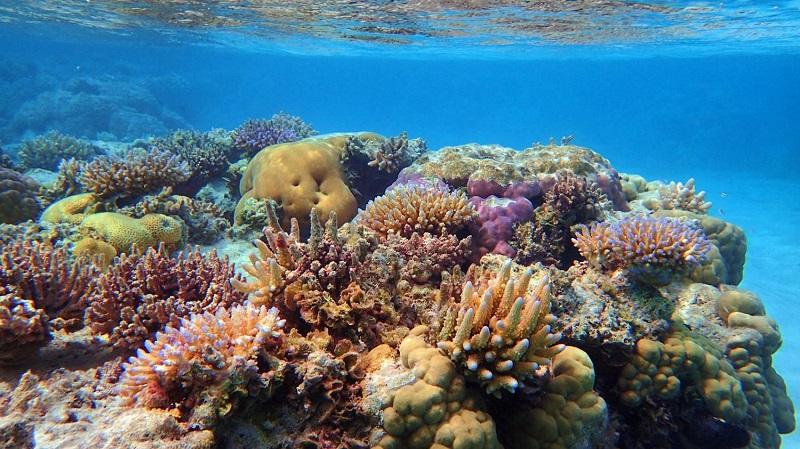 نابودی 95 درصدی مرجانها در 5جزیره ایران
