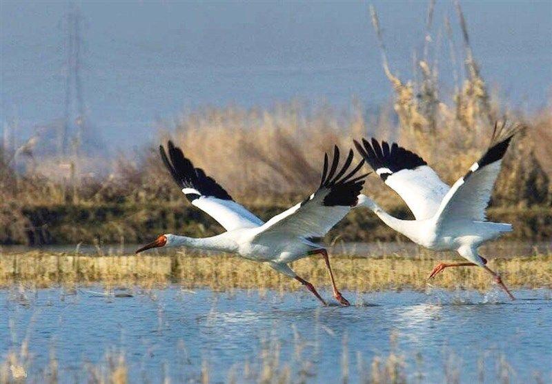 یک قدم تا انقراض چهار گونه پرنده