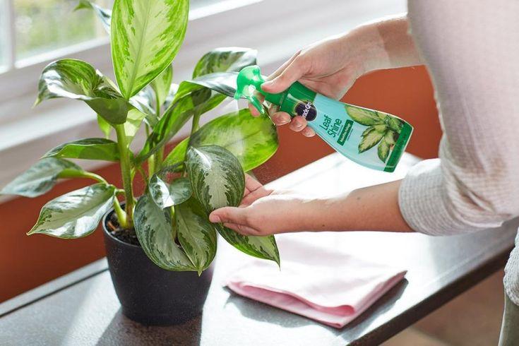 راهکارهایی ساده برای تمیز کردن گل و گیاهان آپارتمانی