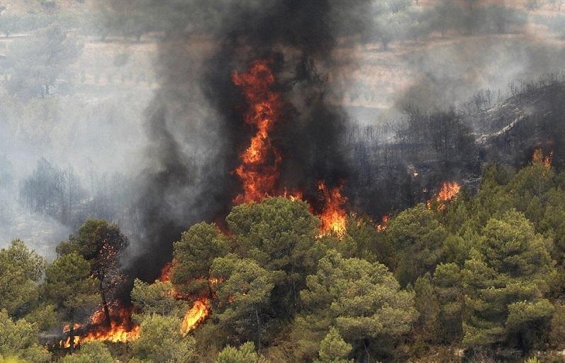 چطور جلوی آتشسوزی در طبیعت را بگیریم؟/ روشهای خاموش کردن آتش