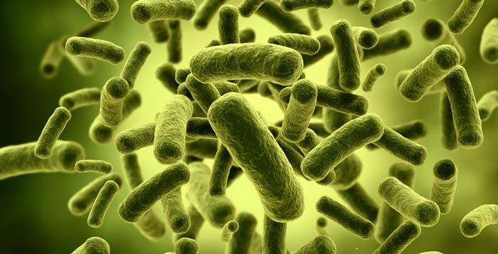غذاهای دارای پروبیوتیک ( دسته ای از باکتریها ی مفید  برای ارتقای سلامت بدن )