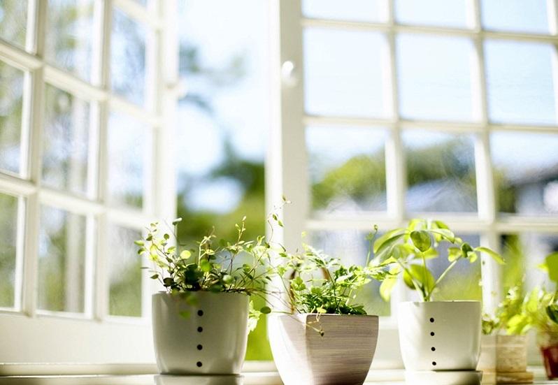 آیا گیاهان واقعا تصفیه کننده هوای خانه هستند؟