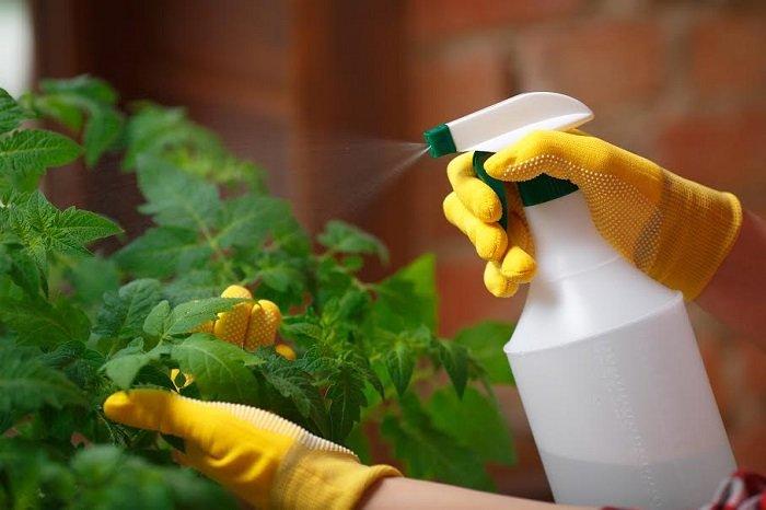 آفت کشی گیاهان با سم های طبیعی و بی خطر