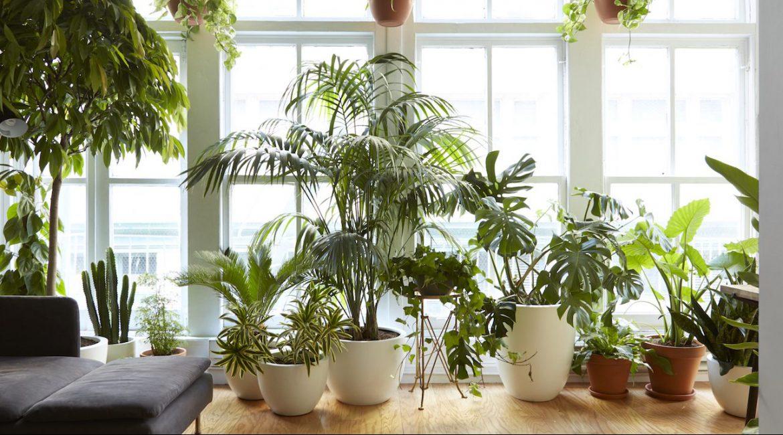 گیاهان آپارتمانی محبوب با نگهداری آسان