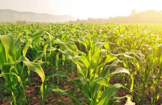 مقابله با تغییرات آب و هوایی زمین با استفاده از گیاهان