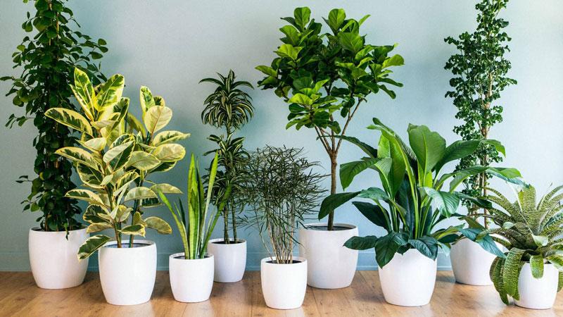 مناسب ترین گیاه آپارتمانی