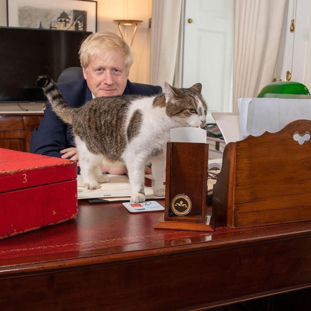 تصاویر گربه مورد علاقه نخست وزیر انگلیس در دفتر نخست وزیری