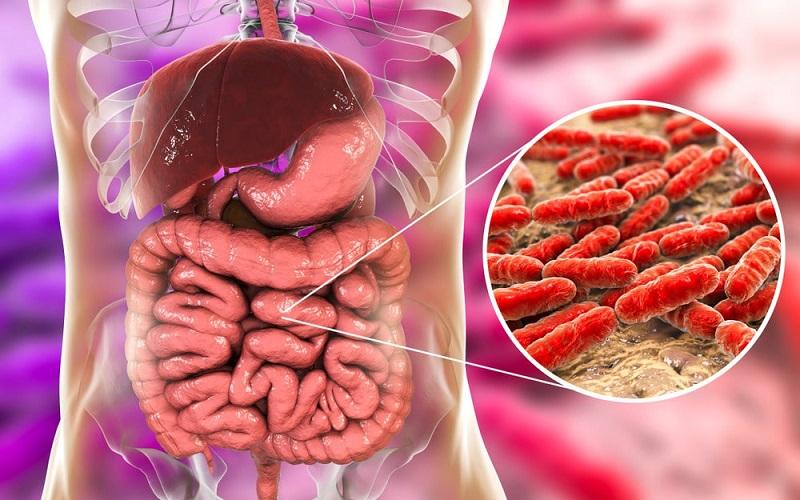 عواملی که باکتریهای مفید روده شما را از بین میبرد