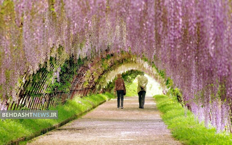 در فصل بهار چه کنیم تا سالم تر بمانیم