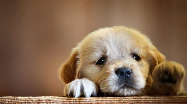 تدوین دستور العمل نگهداری سگهای بدون صاحب با رعایت حقوق حیوانات