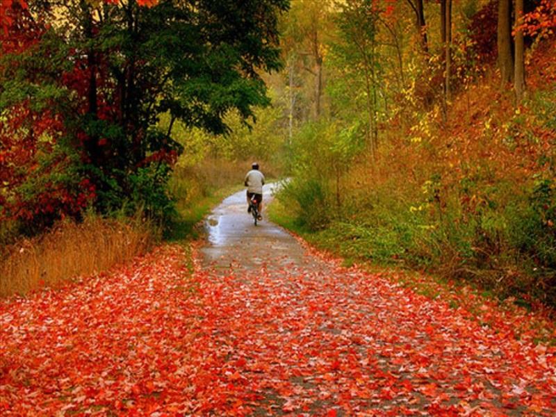 در پاییز با این مواد غذایی از کبد سم زدایی کنید