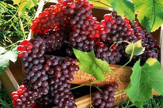 مصرف این میوه پایانی است برای یبوست