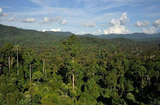 كشف آنتيبيوتيك جديد در جنگلهاي گرمسيري