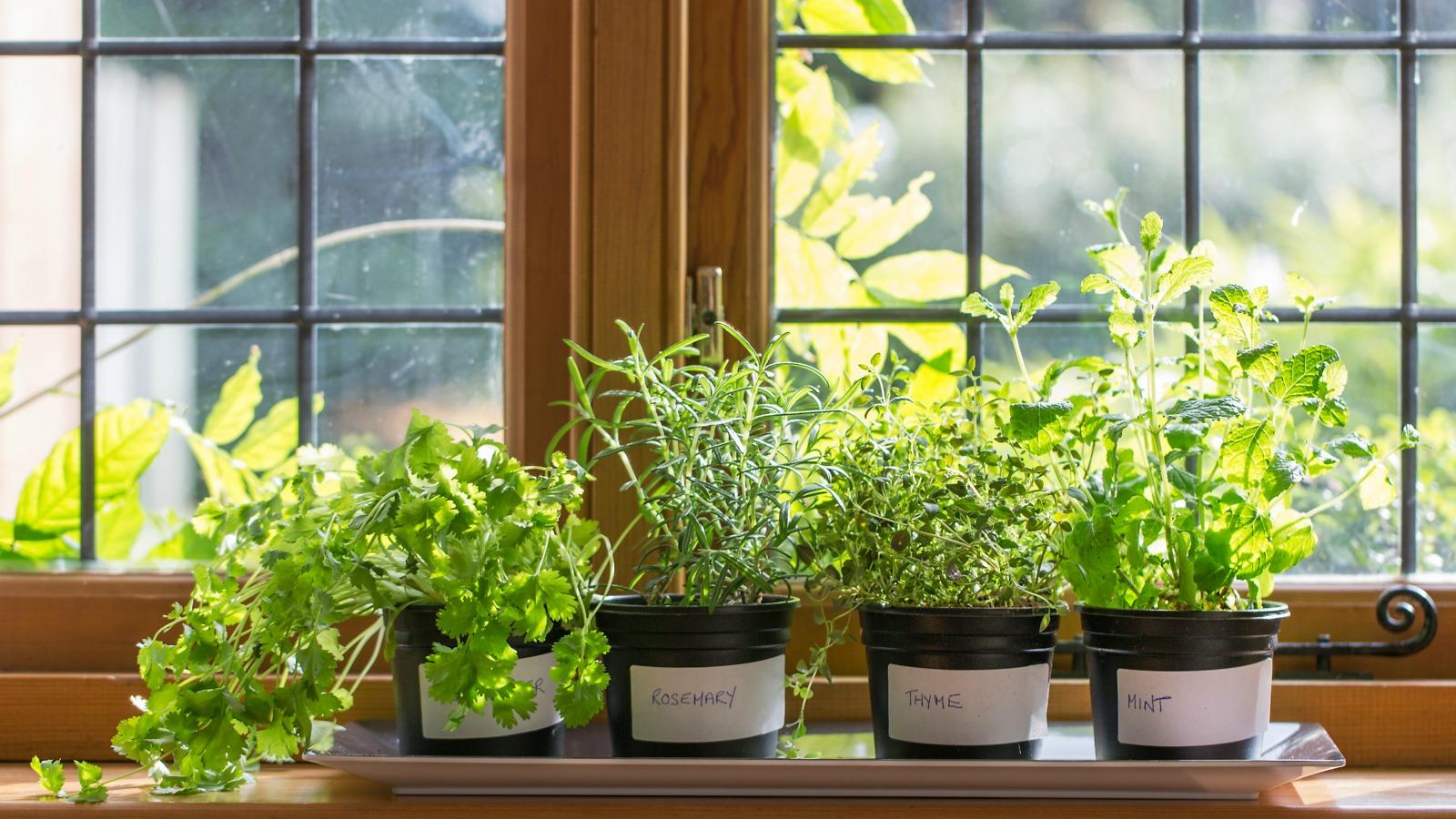 روش هایی برای تمیز کردن گیاهان