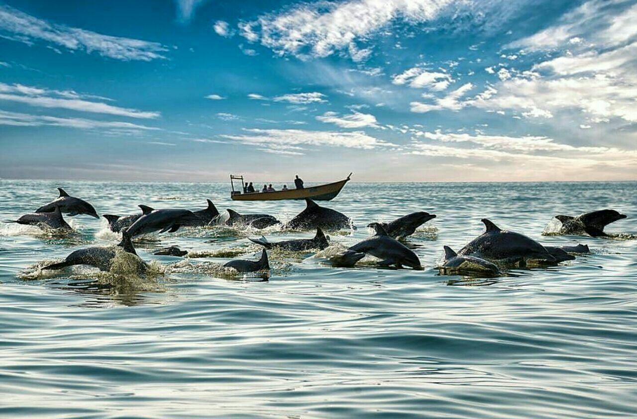 سفر به جزیره هنگام ؛ به میزبانی دلفینها