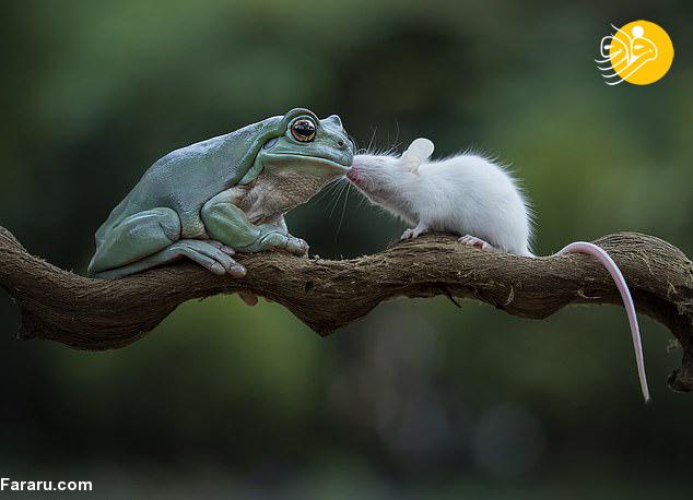 شکار صحنه ای شگفت انگیز توسط یک عکاس در مناطق جنگلی جاکارتا