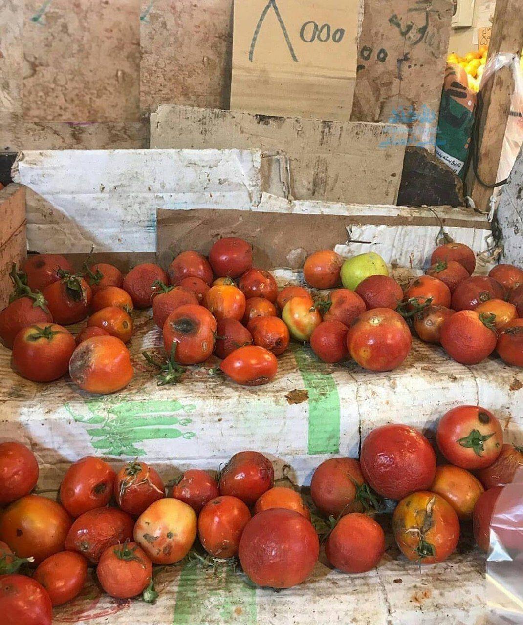 گوجه گندیده کیلویی ۸ هزار تومان! + عکس