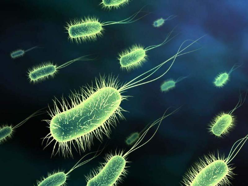 توصیه های طلایی برای حفظ باکتری های بدن