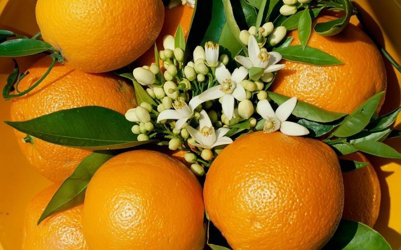 از تمام قسمت های این میوه می توانید استفاده کنید؛ از گل تا پوست