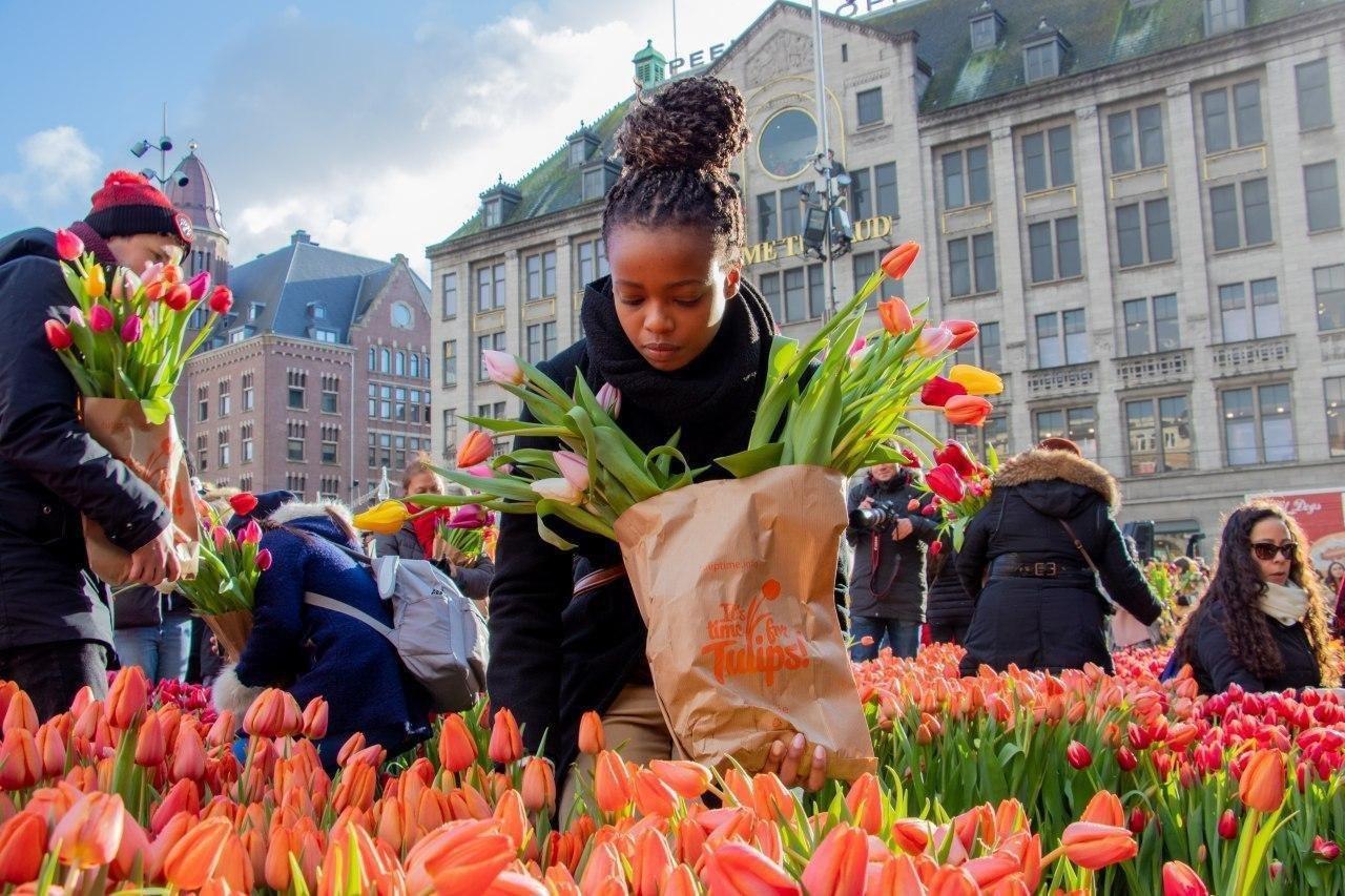 بزرگداشت روز ملی گل لاله در هلند + عکس