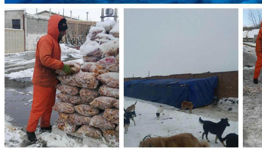 کار خوب شهرداری اردبیل در حفظ حقوق حیوانات + عکس