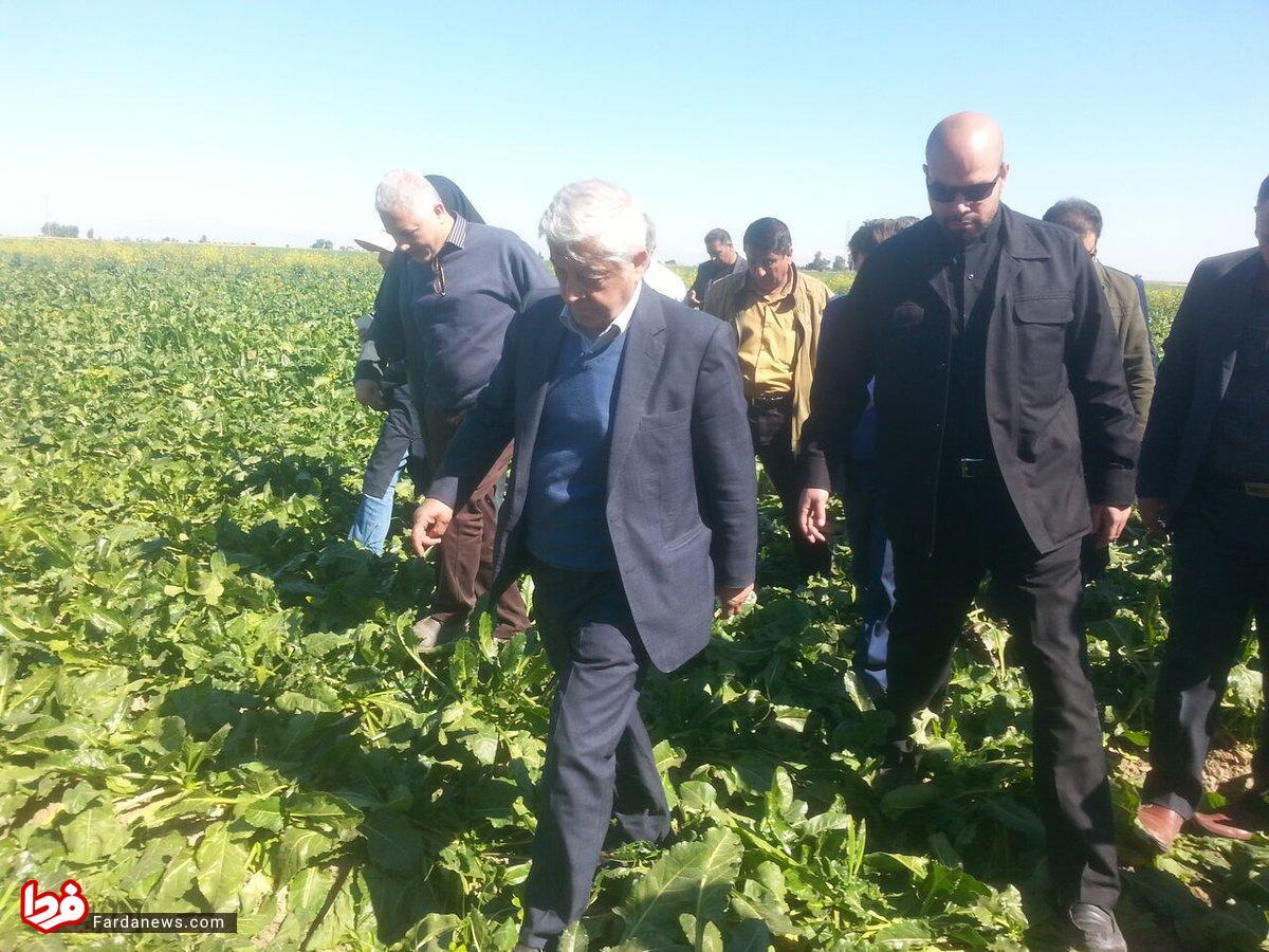 وقتی آقای وزیر روی دسترنج کشاورز ایرانی راه می رود + عکس