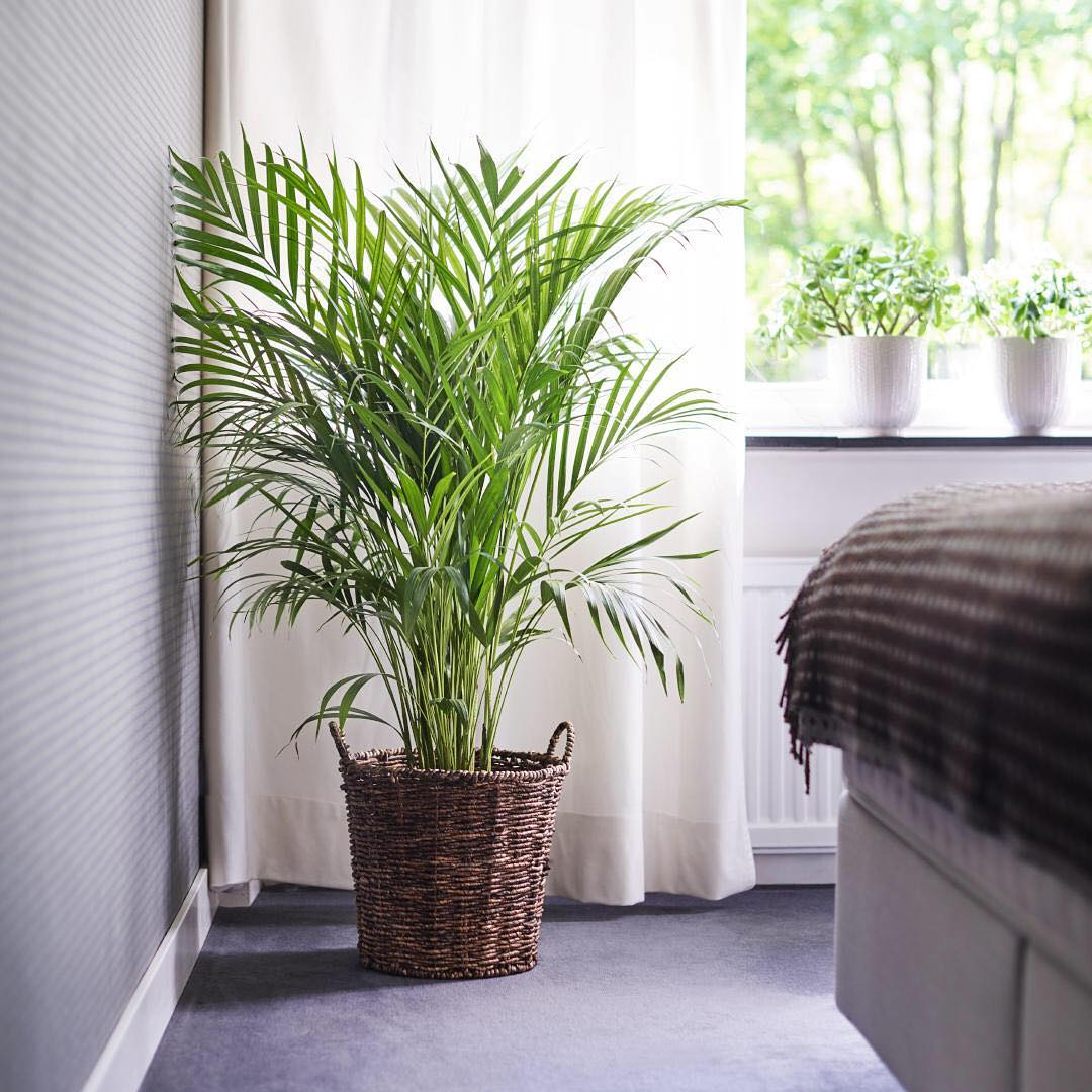 آیا نگهداری گیاهان در اتاق خواب خطرناک است؟