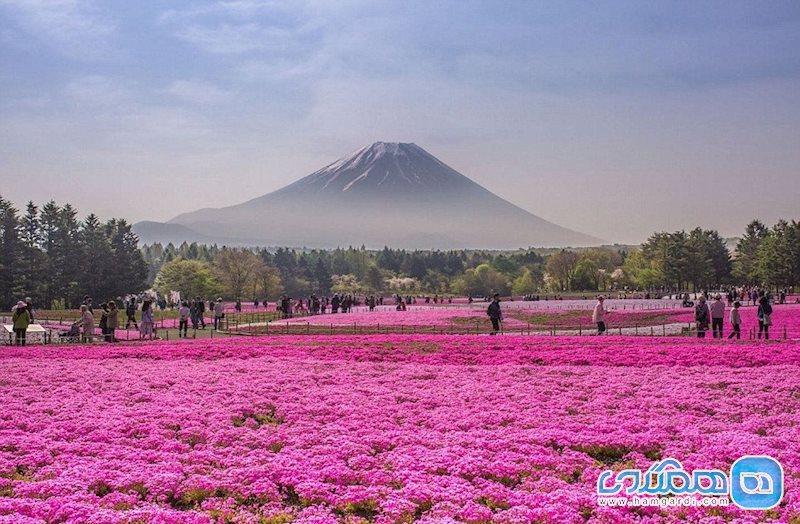 پارک هیتاچی؛، بهشتی از گلهای رنگارنگ در ژاپن + عکس