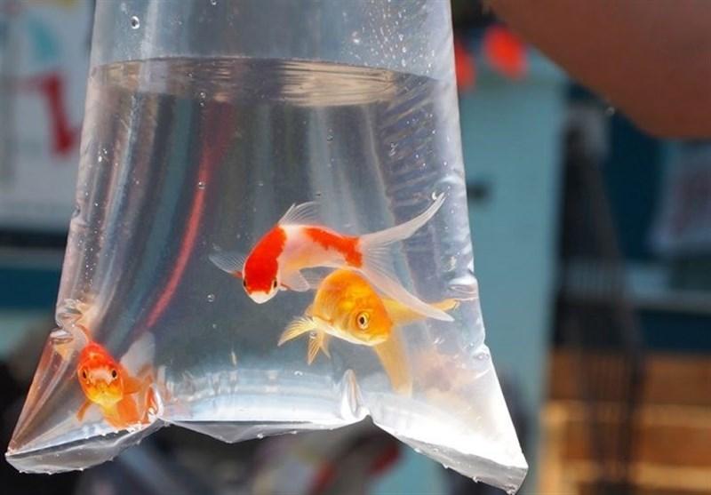 فروش ماهی قرمز ویژه عید نوروز در تهران ممنوع شد