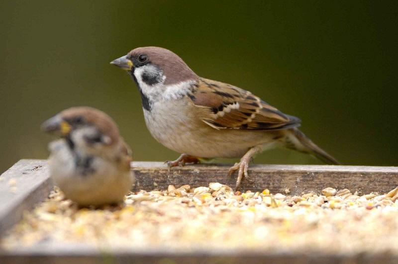 پرندگان میتوانند ناقل کرونا باشند؟