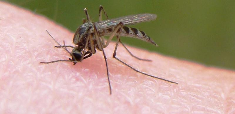 حشرات باعث انتقال ویروس کرونا میشوند؟