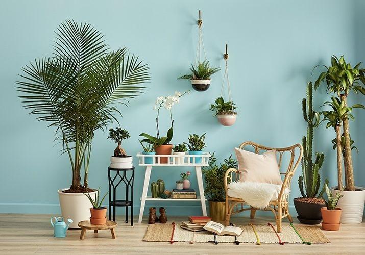 این گیاهان آپارتمانی برای خانههای کمنور مناسب هستند