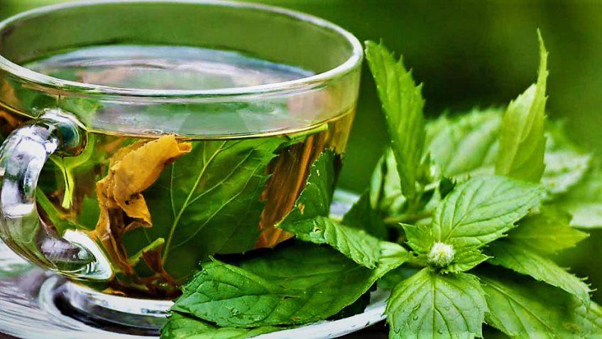 گیاهی که بیماریهای عفونی را درمان میکند