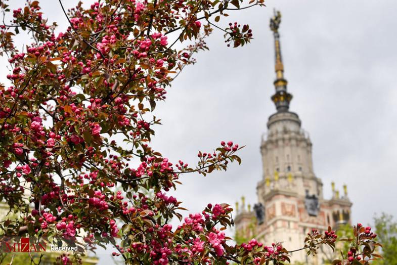فصل بهار در روسیه+ تصاویر