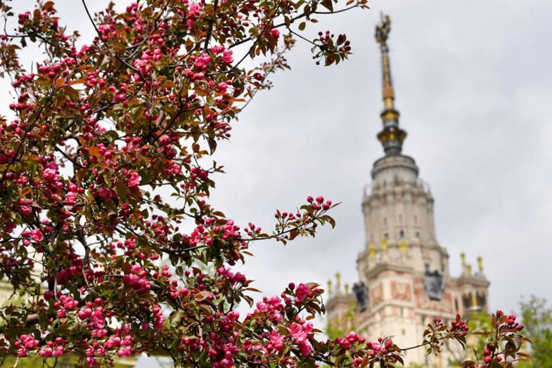 بهار فوق العاده جذاب در روسیه + عکس