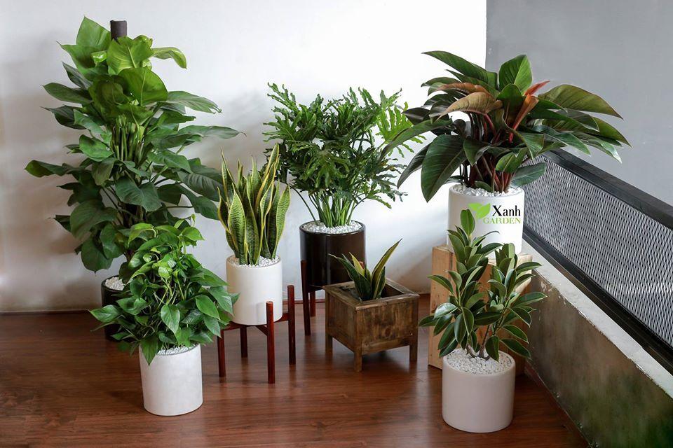 این گیاهان امواج مضر را از بین میبرند