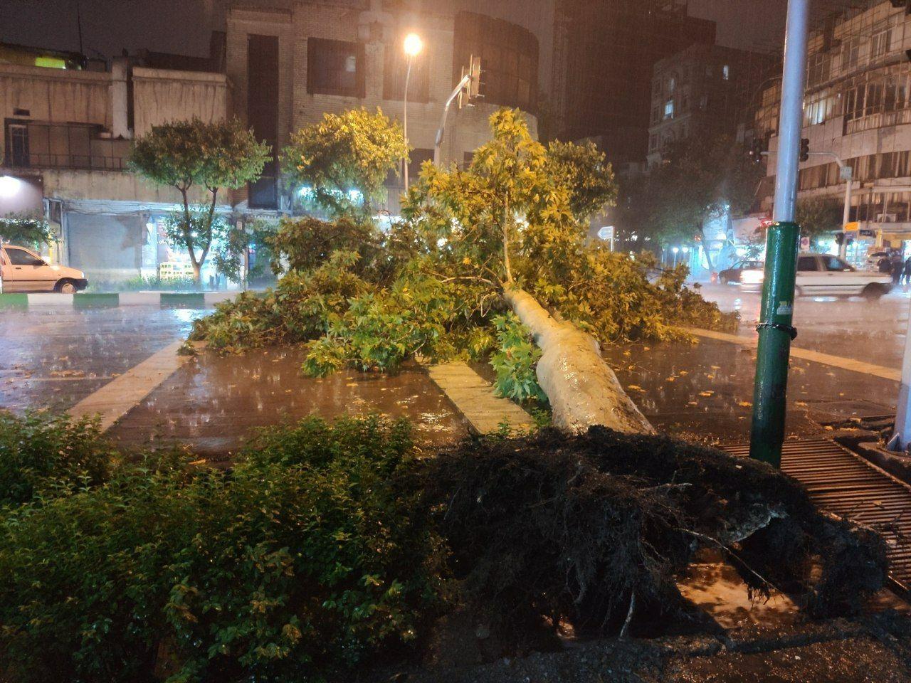 سقوط درخت در تهران بر اثر طوفان شدید باعث وحشت شد! + عکس
