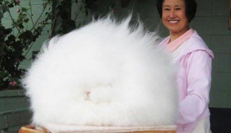 عجیبترین خرگوش دنیا +تصاویر