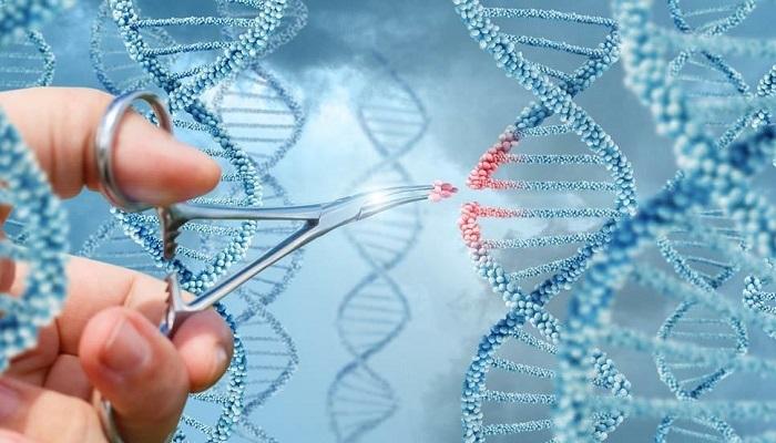 درمان چاقی با حذف یک ژن