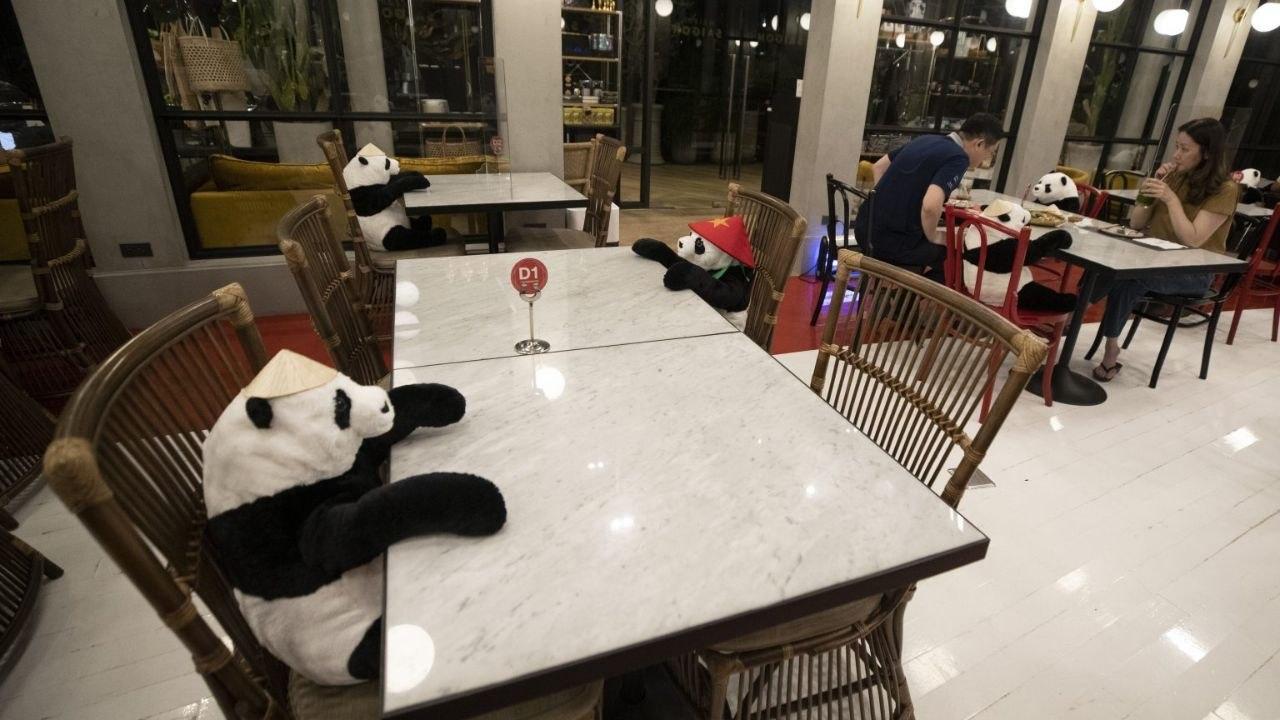پانداها میزهای خالی رستورانهای تایلند را پر میکنند + عکس