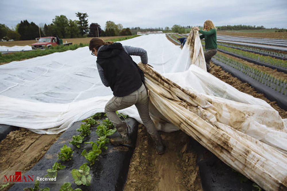 کشاورزی در نیویورک + عکس