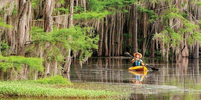 ۸ جنگل غرق شده جهان که نفس را حبس میکند+ عکس